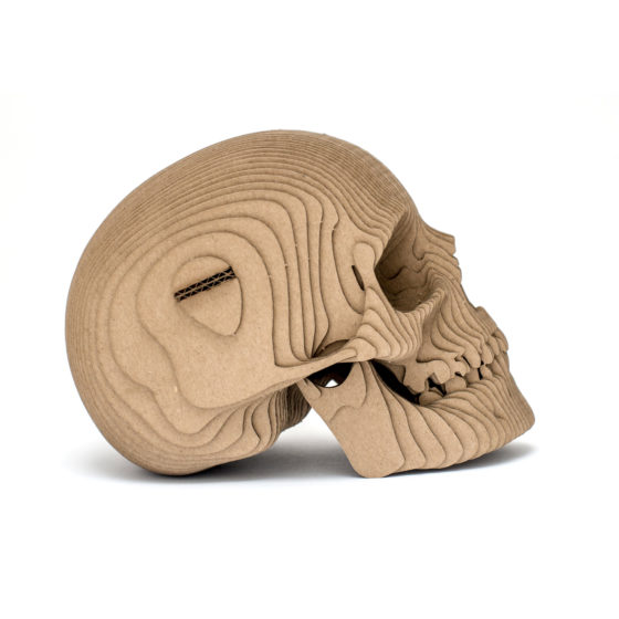 Skull_03