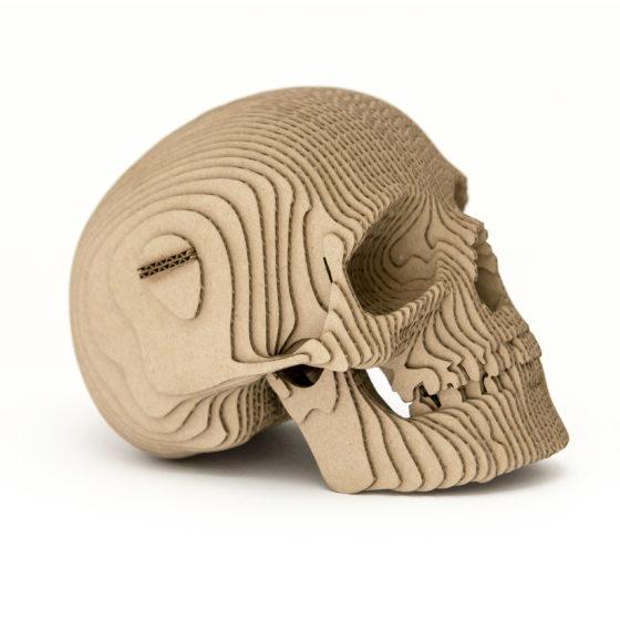 Skull_13